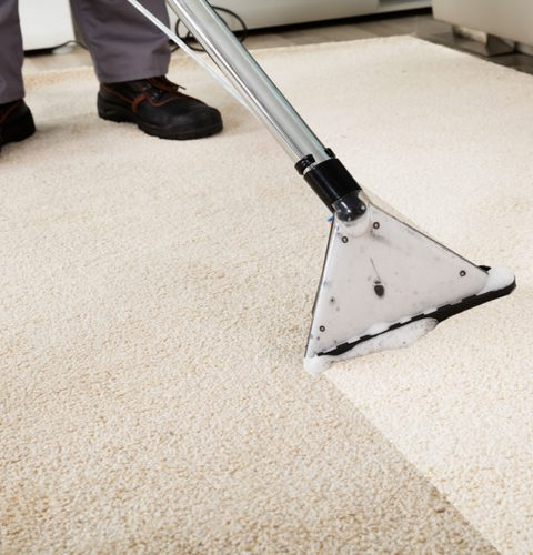 Carpet Mold and Mildew Guide